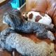 【ペットと遊ぶ】愛知県日進市:「5tsubo de marine」は看板犬に癒やされる & 可愛らしい雰囲気のカフェでした