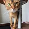 猫さんの写真が上手く撮れない件についての続き。