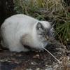 柳ヶ壺で脱走猫に遭う