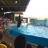 新江ノ島水族館が凄く楽しい!イルカショーを見に行こう