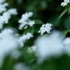 植物園の春 #2