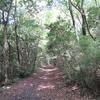 アサギマダラ舞う森林公園