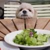 【犬にはどの食材が危険?】犬に食べさせたらダメな食べ物は?