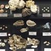 真鶴の旅 ② 念願の「遠藤貝類博物館」そして「貴船神社」へ