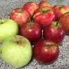 リンゴ探求続く。