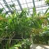 植物園、見頃の花たち
