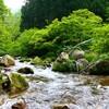 渓流シーズン始まってます