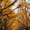 神宮外苑の銀杏並木-東京