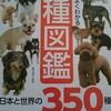犬の勉強に!犬種図鑑🐶