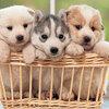 韓国のペット業界の注目スタートアップ !