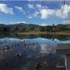 大覚寺の大沢池をパノラマで