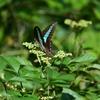 🐞またまた小石川植物園で昆虫撮影しました☺