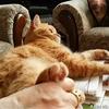 拒否する猫~Don't touch me~