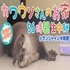 【ニコニコ】カワウソさんのお家56時間生中継@サンシャイン水族館【今月のいきもの】