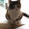 【愛猫日記】毎日アンヌさん#69
