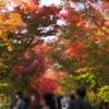 一日一寺 紅葉の京都を堪能! 京都ワーケーション1週間 ①清水寺・永観堂