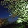 夜桜7時ランニング