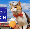 明日は2.22 ネコの日🐈と忍者の日ニャン♪
