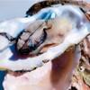 牡蠣が旬になりました!