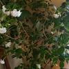 使い切る暮らし~米のとぎ汁は立派な肥料♪わが家の植物はこんなにワサワサ元気です。