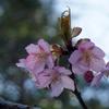春に向かう日々   〜季節も自分も〜