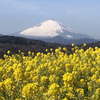 【YouTube 更新】#Shorts 富士山は動じない。頼朝の姉ゆかりの富士山の姿。