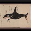 大阪で「くじらフェス」/ノルウェーの伝統的な鯨料理のレシピ/千葉TVでツチクジラ料理/千葉沖で混獲2頭/鯨類追込み網漁、今季通算14日目と15日目の成功/世界のザトウクジラ回復基調/シャチと捕鯨