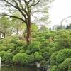 根津神社つつじ祭り2017 つつじ苑への入園方法