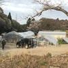 サボテンオークション日本へ行きました。