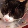 今日の黒猫モモ&白黒猫ナナの動画ー613