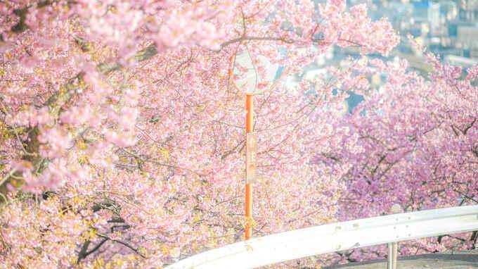 ふんわりかわいいパステルフォトの世界 – 春のオススメ被写体とレタッチ術