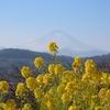 大磯城山公園2021.1.13と二宮町の吾妻山公園2021.1.14