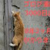 連続3000日目のブログ更新!