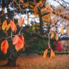 新宿御苑で、今年最後の紅葉狩りデートをしよう。