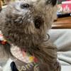 犬服🐩 フード付きカーディガンを作ってみた
