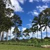 ハワイでバースストーン