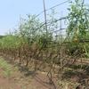 農園日誌Ⅱー「活きること」ーPART27