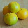 柑橘の季節が始まる