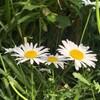 薫る風、揺れる花。