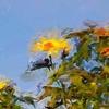 FotoSketcherのペイント10(ブラシストローク画)で、写真をゴッホ風にする。