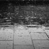 今日は雨かつ台風です。