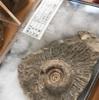 8000年前のアンモナイト今日も不思議な引き寄せが!