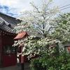 2019.04.27 大慶寺~神社