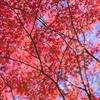 紅葉はこれからの寺家公園
