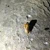蝉の羽化を探索 ~Exploring the hatching of cicadas