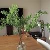 もう枯らさない!マンションの中部屋でも、育てやすくカッコいい植栽ベスト3選!
