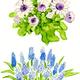 花のイラスト 水彩