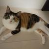 【愛猫日記】毎日アンヌさん#274