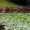 南足柄市運動公園の池(神奈川県南足柄)