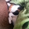 【愛猫日記】毎日アンヌさん#104